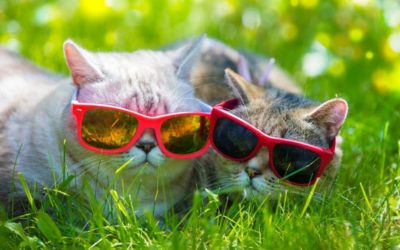 Cool Cats for the Summer 🕶️
