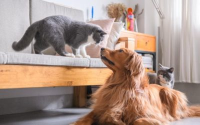 Healthy Dogs & Cats = Healthy Life!
